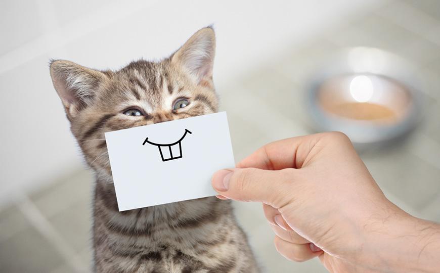 A-funny-cat