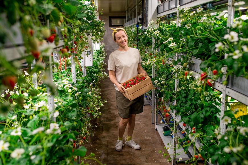 a-kitchen-garden